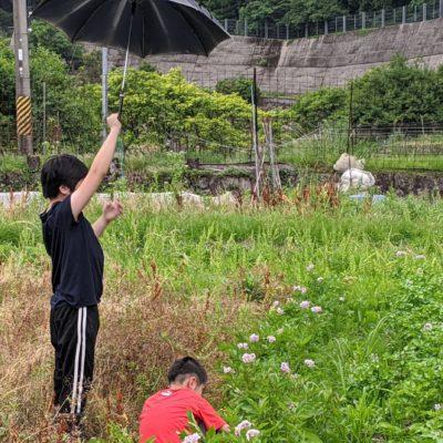 食料自給用の畑がある。何か作りたかったら使える。